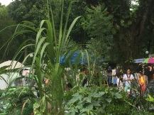 OFC-HerbsGarden-Market2