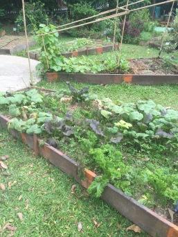 OFC-HerbsGarden