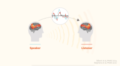 speaker-listener-brains-in-sync